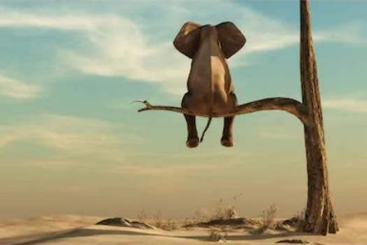 elephant-in-a-tree-erin-butler-fi