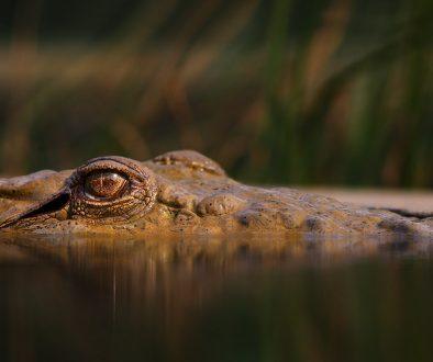 alligator-erin-butler
